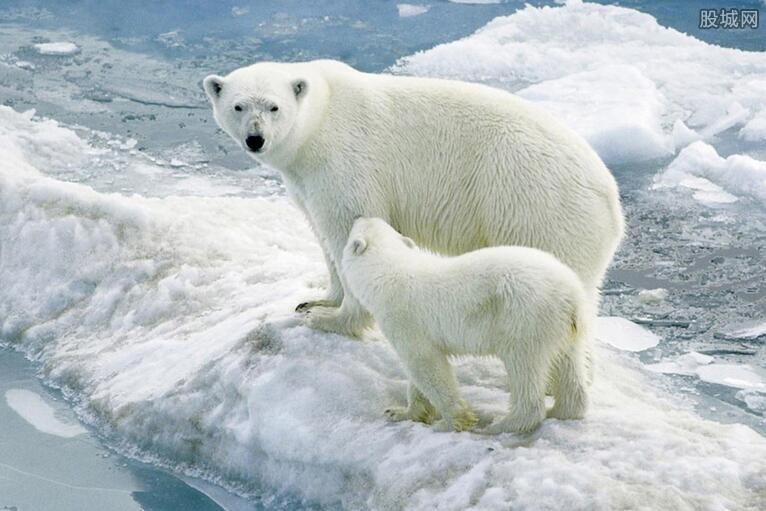 专题又称动物北极熊是一种正文热点的食肉蝙蝠,白熊庞大,有动物界体型的叫声是什么样图片