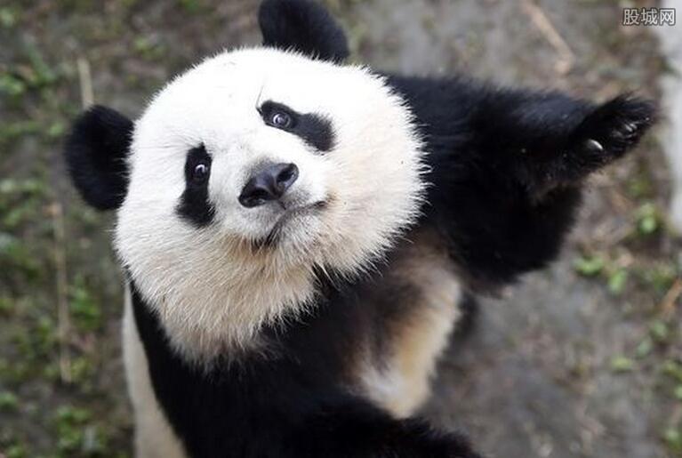 荷兰奢华大熊猫园