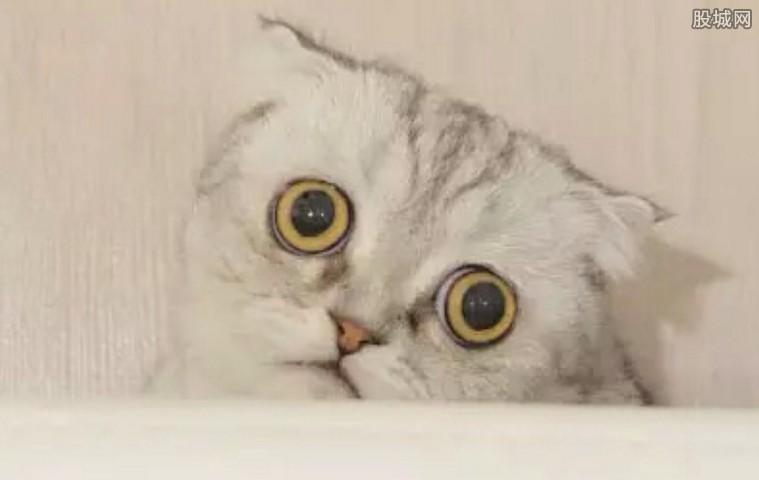绝望猫 被阉后绝望表情竟然走红网络