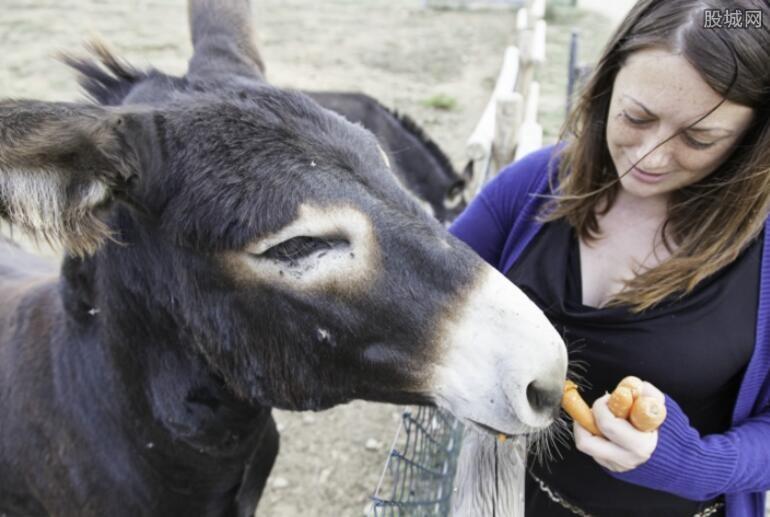驴与女子图片