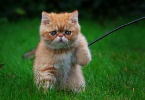 主人搬家两猫跳井自尽 猫情侣灵性感人肺腑