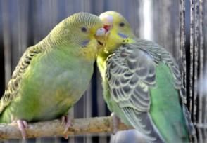 动物园板蓝根喂鸟 病毒换代了为何板蓝根依然是主角?