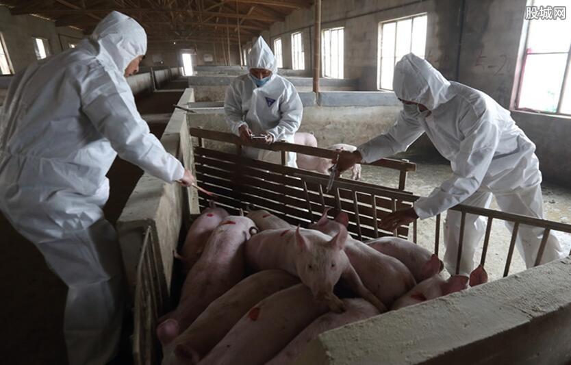 非洲猪瘟疫情