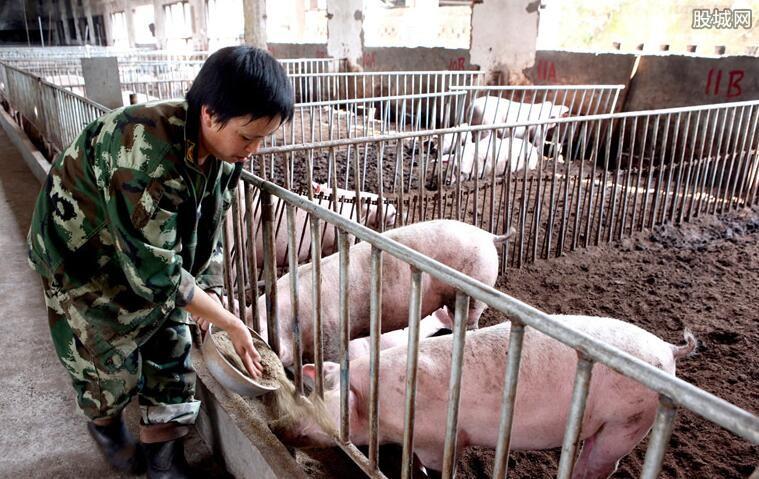带猪皮入韩被罚 2019非洲猪瘟最新消息