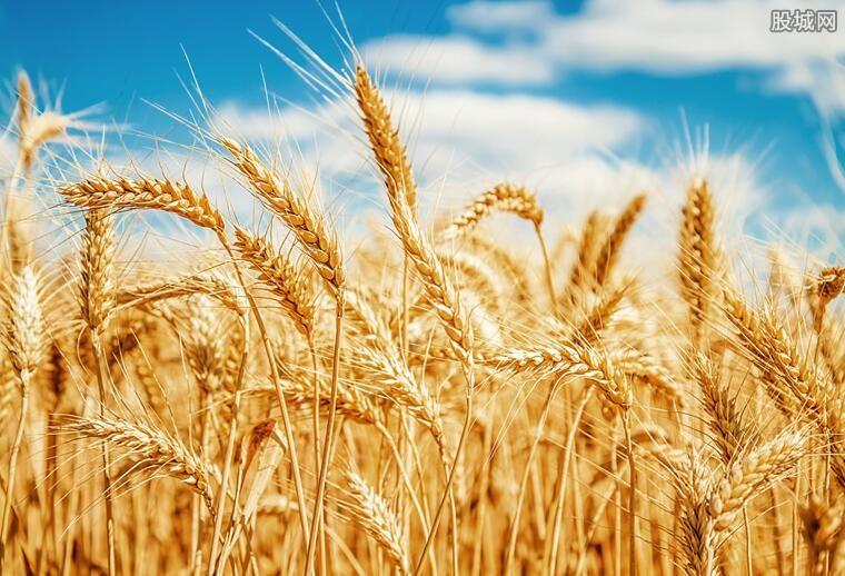 沙漠边种海水稻 未来新疆盐碱地要变良田啦