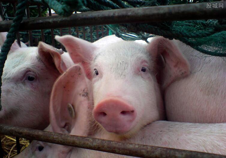 带猪皮入韩国被罚