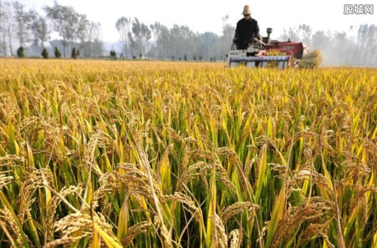 粮食补贴最新政策
