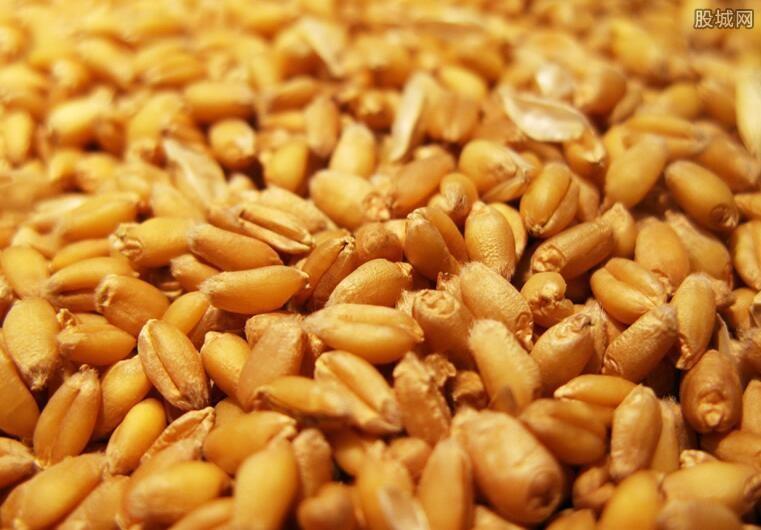 非洲粮食短缺引关注