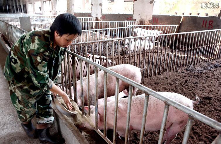 养猪最新政策规定