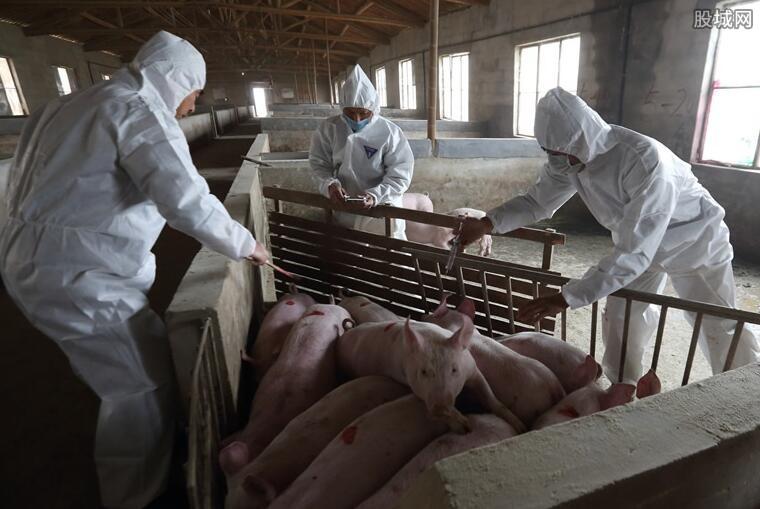 非洲猪瘟最新消息