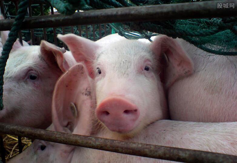 明年猪价预测 2020