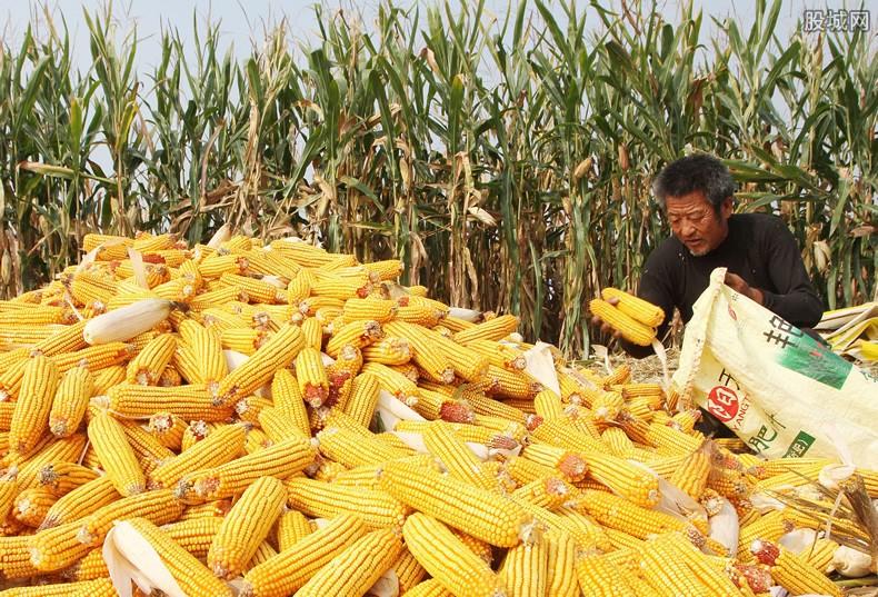 元旦玉米多少钱一斤