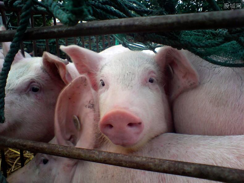 养猪500头投资多少
