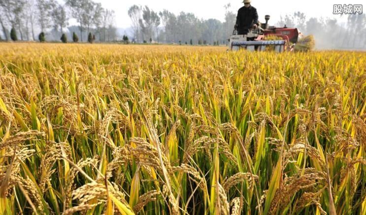 水稻价格最新消息