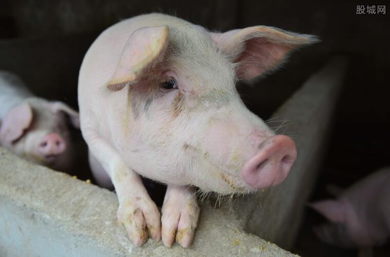 春节猪肉价格多少钱一斤