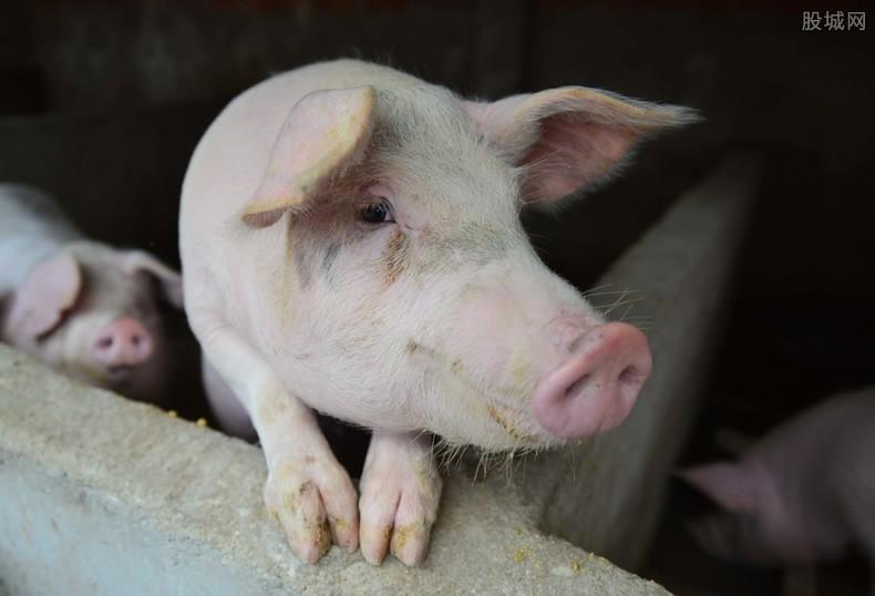 六省禁运生猪是真的吗