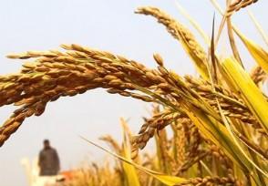 袁隆平称中国不会出现粮荒 具备自给自足的能力