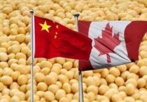 中国取消加拿大订单吗?真实情况是这样的