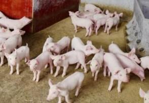 猪流感有多可怕?调查发现高度适应感染人类