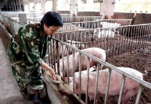 猪流感最新消息2020年该疫情会爆发吗