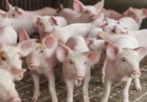 中国出现的猪流感不是新病毒来看官方最新回应