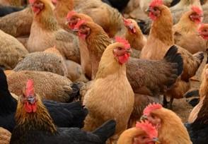 为什么停止活禽交易7月份以后不能杀活禽吗