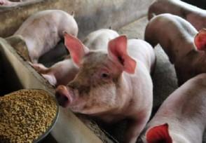 预计8月份猪价格是涨还是跌?2021年还会缺猪吗
