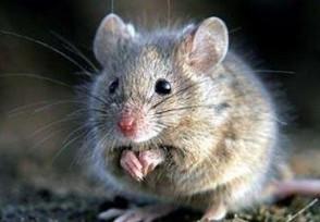 蒙古国新增一例疑似鼠疫病例为6岁儿童 揭疫情新状况