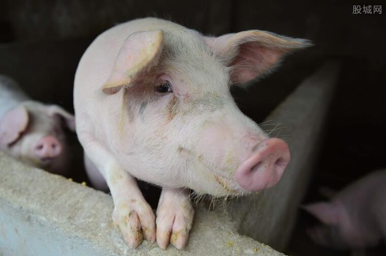 猪价是涨是跌