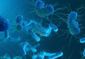 军团菌到底有多可怕? 死亡率高比新冠病毒还厉害