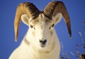 蒙古捐3万只羊给中国为啥要捐赠羊呢