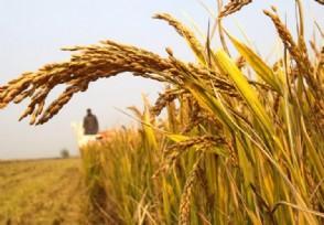 中国粮食储备够吃多久2020粮价会大涨吗