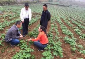 在农村做什么生意投资小利润大 这些项目有前景