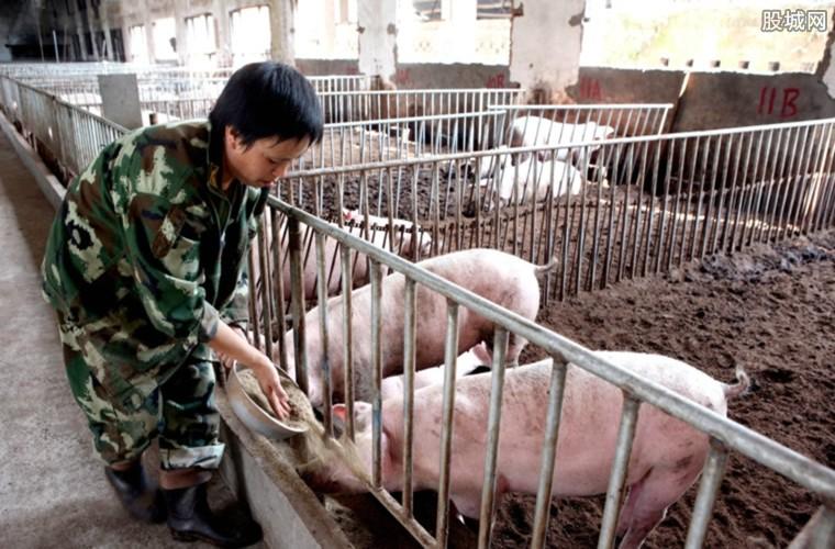 中秋生猪价格会上涨吗