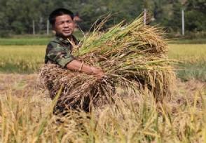 拉尼娜事件会影响粮食产量吗农业农村部发布技术意见
