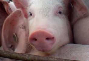 国务院发布最新猪肉价格中秋节前会再次涨价吗?