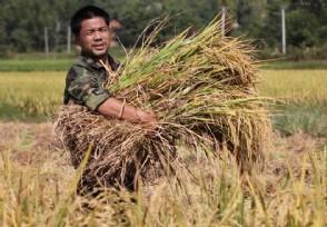 全球6.9亿人在挨饿 粮食浪费量仍然很惊人