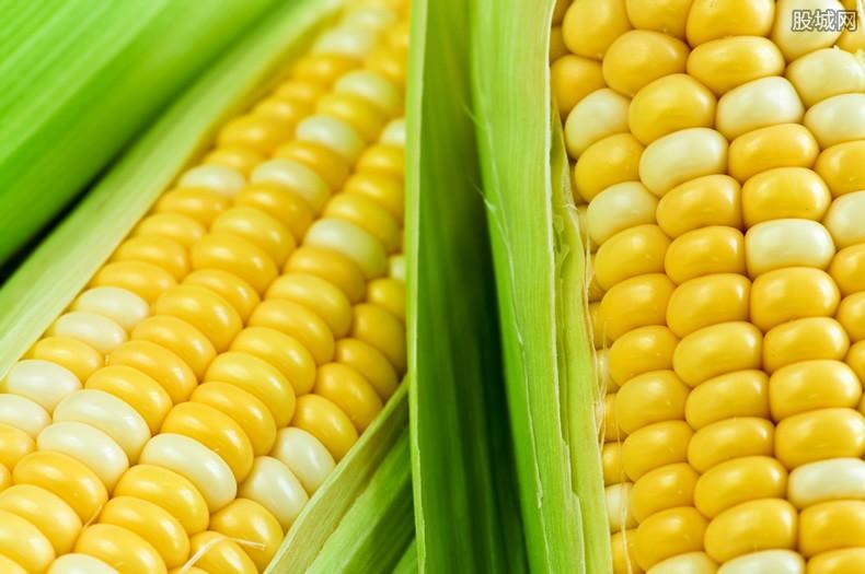 玉米价格上涨