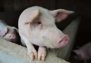 郁亮回应万科养猪只是一个小小的尝试