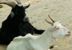 蒙古国3万只羊怎么分配折合人民币多少钱