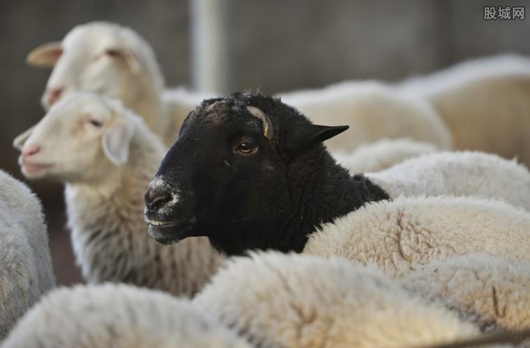 蒙古国捐赠活羊入境