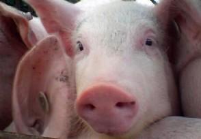 猪肉价格连降7周官方称元旦春节不再大涨!
