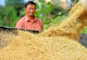 2020秋粮收购工作什么时候开始价格能涨吗?