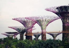 新加坡入境新规定新冠检测阴性将无需隔离