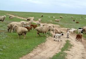 农村养什么赚钱 这些养殖业前景不错
