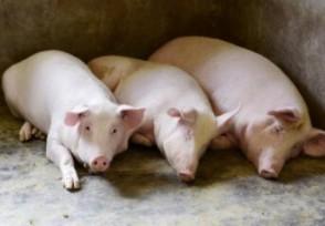 猪肉价格趋势如何未来生猪出栏价格呈现下调