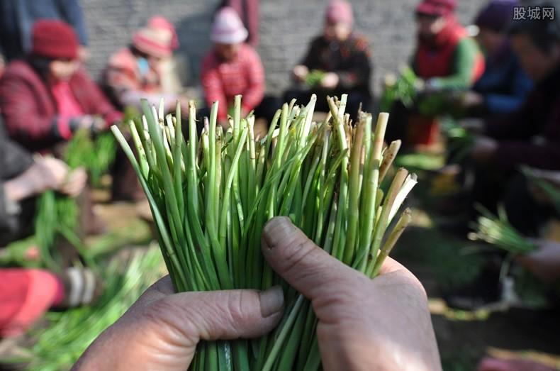 炒股收割韭菜