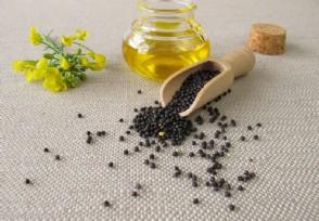 油菜籽多少钱一斤?来看2020价格最新行情走势