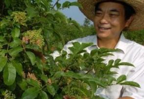 农民创业致富好项目 农村创业这些项目有前景