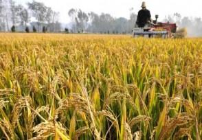 中国粮食储备够吃几年看完内容你就清楚了
